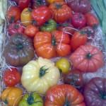 Vence_tomater från förr
