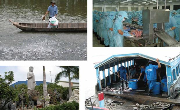 fiskodling pangasius