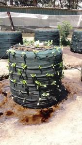 Från visningsjordbruket. Nätsäck med jord och olika grönsaker, droppbevattnas. Plåt undertill som fångar upp spillvattnet är ännu inte på plats.